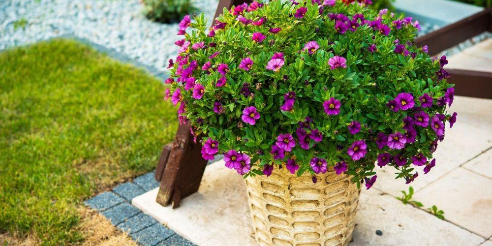 Kwiaty Sercem Naszego Ogrodu Doniczki Plastikowe